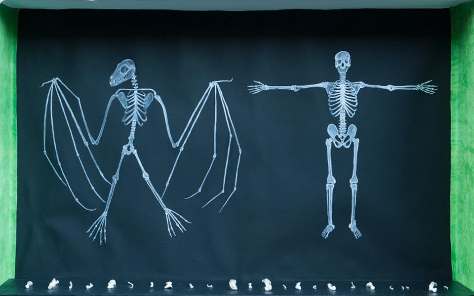 Nocturnal_skeletons-copy