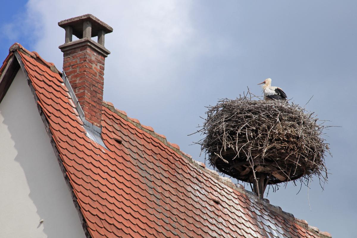 stork_nest